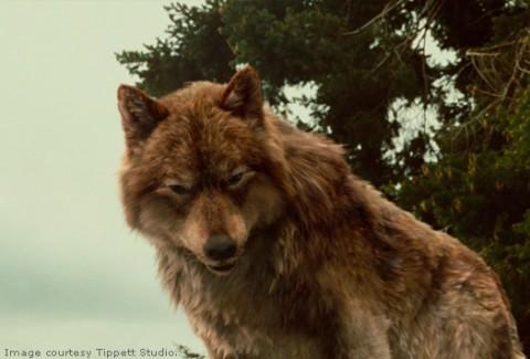 сумерки картинки волк