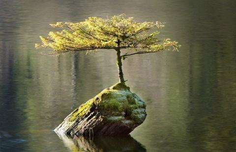 Уникальное явление: дерево, …