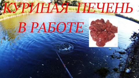 Рыбалка на куриную печень в …