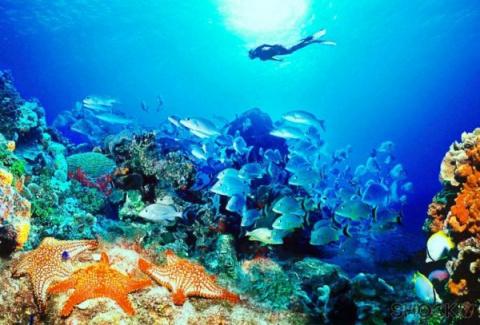 Из мирового океана быстрыми темпами пропадает кислород