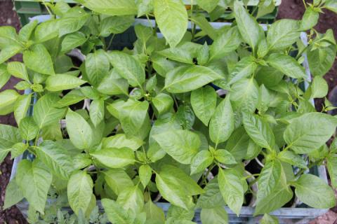 Сроки посева семян на рассаду: хитрый способ расчета