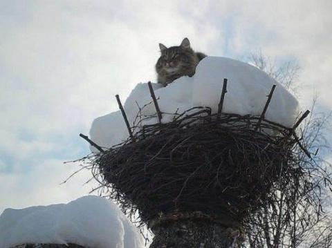 Весна — коты прилетели!