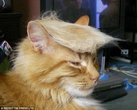 Преврати кота в Трампа! Нова…
