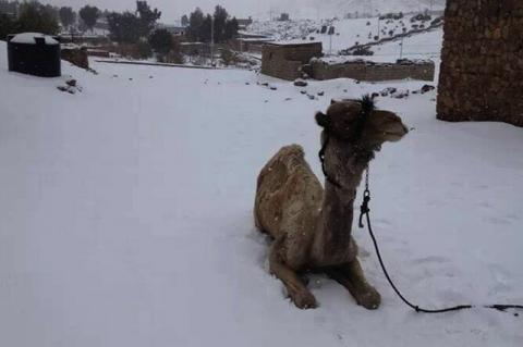 Городок в Сахаре завалило снегом