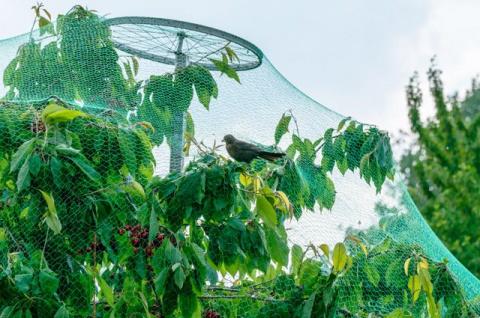 Технологии для дачника: 4 изобретения, которые улучшат ваш сад