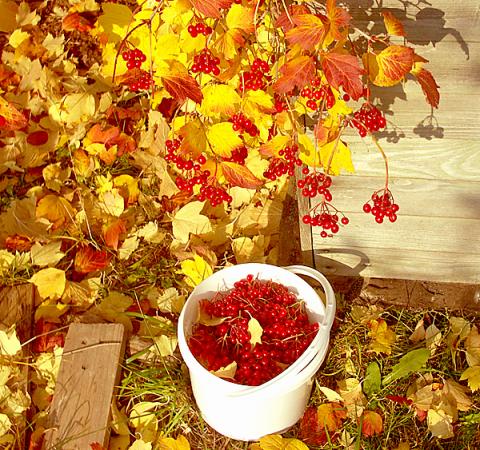 Осенние хлопоты