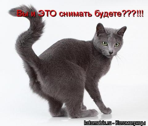 """""""Мои коты не метят! """""""