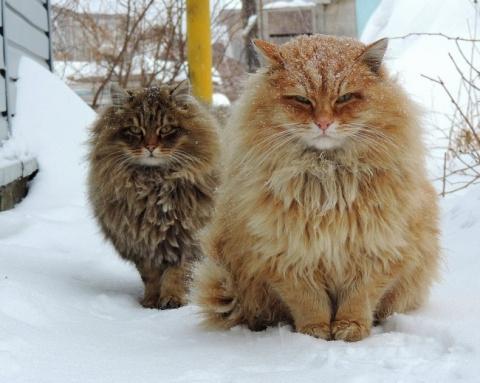 Кошки — удивительные обитатели нашей планеты! III