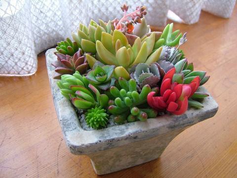 Комнатный цветник из суккулентов - самые красивые идеи