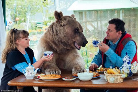 Большой, плюшевый, твой: история медведя Степана, который живет в российской семье