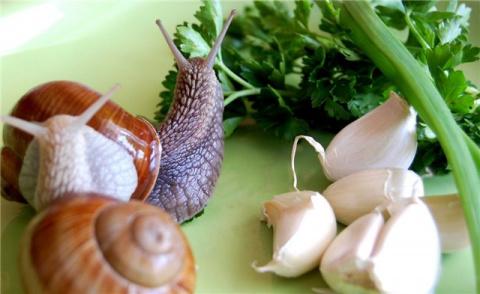 Escargot– улитка
