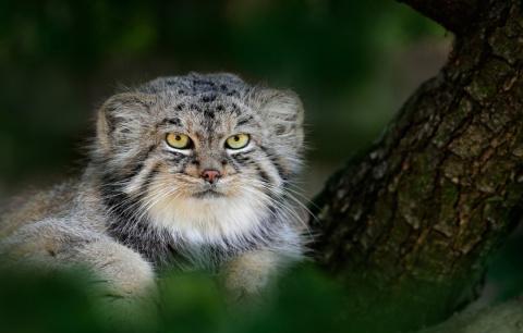 Самый красивый котик России!