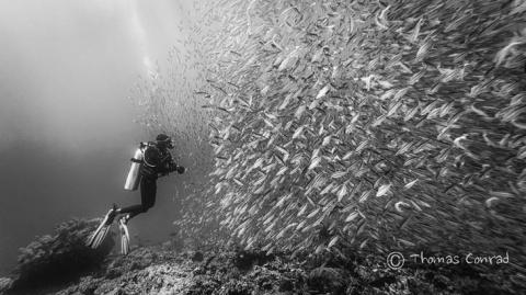 45 красивых подводных фотогр…