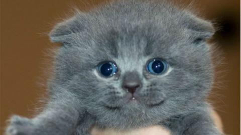 Эти милые и смешные котэ!