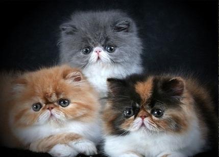 Сколько живут коты и как рас…