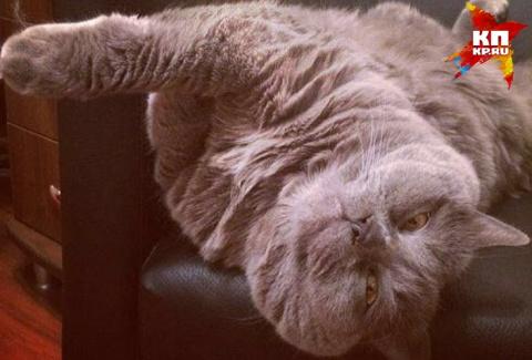 Екатеринбургский зооспасатель, рискуя жизнью, вытащил кота из канализации