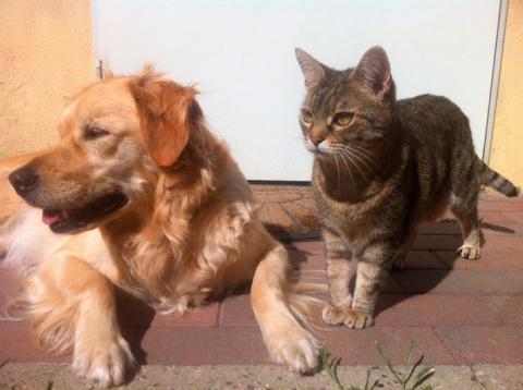 Теперь точно знаю, кошки пон…