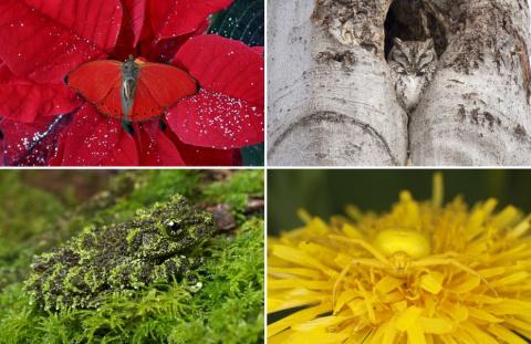 20 неподражаемых гениев маскировки в мире живой природы
