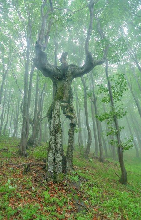 Необычные деревья. Это потрясающе!!!