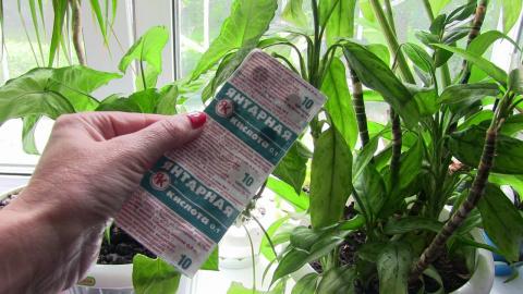 Экстренная помощь для комнатных растений