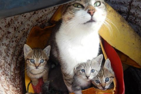 Домики для кошек могут появи…