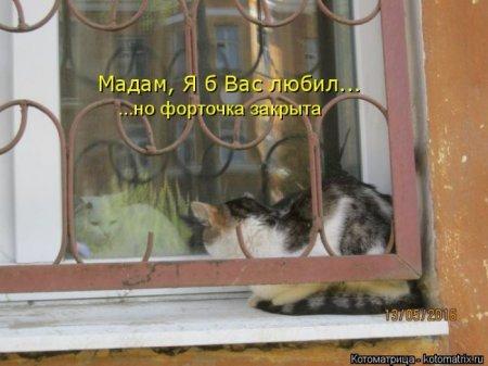 Котодром - 16 от Михалыча