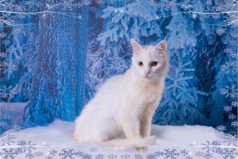 Санкт-Петербург!!! Приглашаем на выставку-пристройство котов и кошек «СНЕЖНЫЕ КОТЫ. СЕВЕРНОЕ СИЯНИЕ»!!!