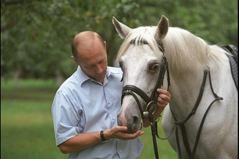 День украинского коня. Алекс…