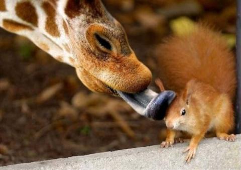 Случайно-удачные снимки с животными