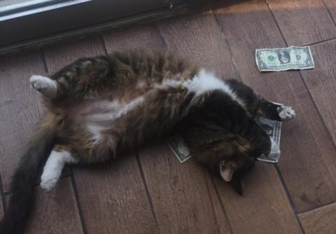 Офисный кот, который очень л…