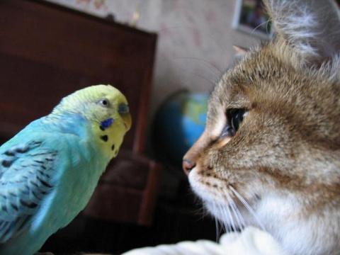 Попугай говорит с котом. Видео которое заставило смеяться тысячи людей!