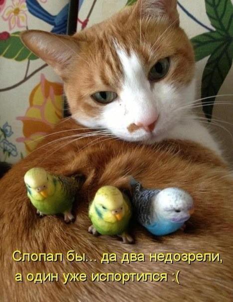 Тем, у кого случилось плохое настроение — для вас кошачий позитив!
