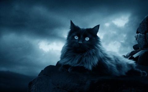 Кот-некромант