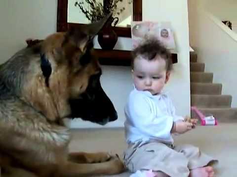 Малышка отобрала у овчарки её еду.