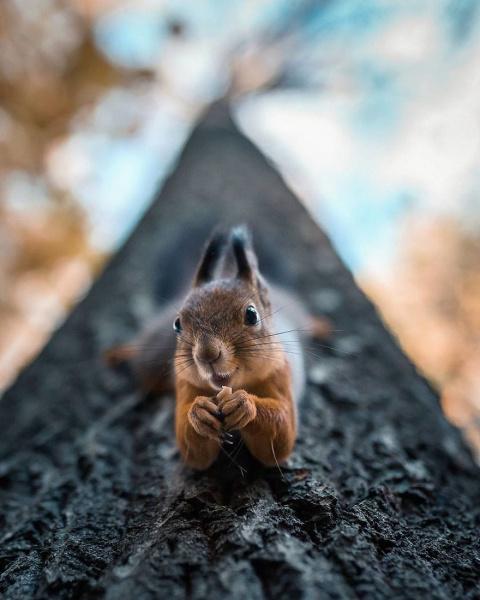 Этот фотограф делает снимки …