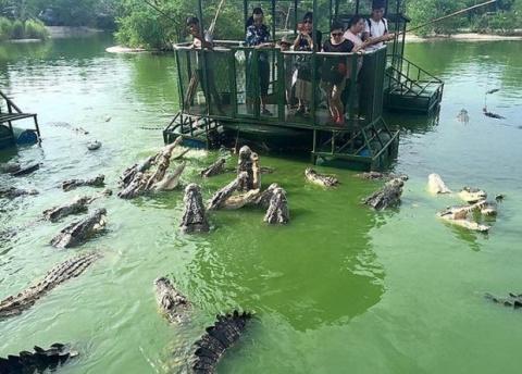 Крокодиловая ферма в провинц…
