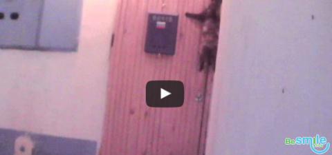 Вы такое видели? Кошка сама звонит в дверной звонок!
