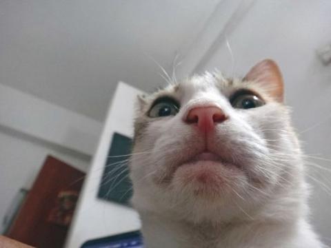Коты-хакеры, которые неправи…