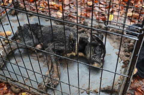 Все думали, что эта собака умрет, но любовь одного человека спасла ее