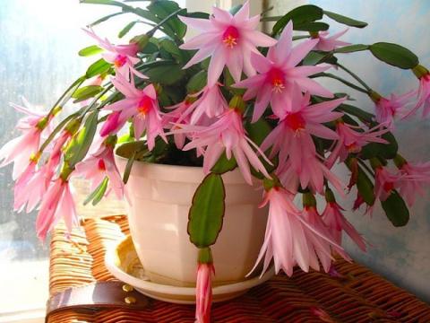 Секрет пышного цветения комнатных растений! Когда можно сажать и сеять - приметы, проверенные веками!