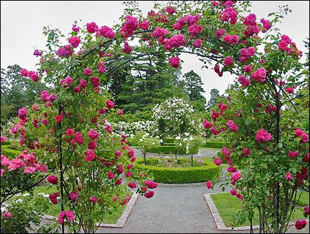 for Little flower garden ideas