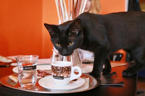 Выгнать, чтобы он нашел свое счастье: история про кота и не только...