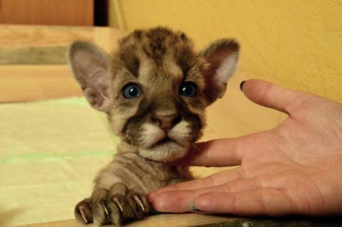 Пум Пумыч- маленький котенок…