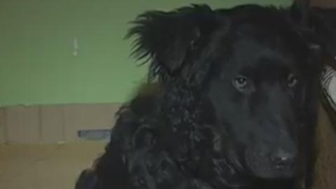 Похороненная  собака выбралась из могилы