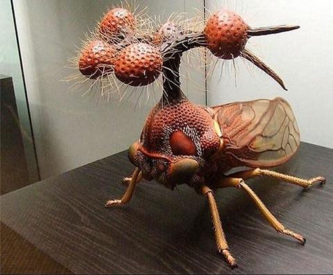Самые странные и ужасные насекомые мира