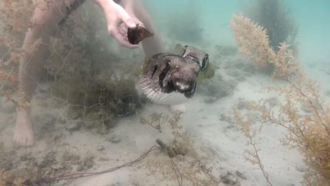Парень спасает ядовитую рыбу…