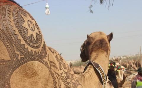 Обычно верблюда невозможно н…