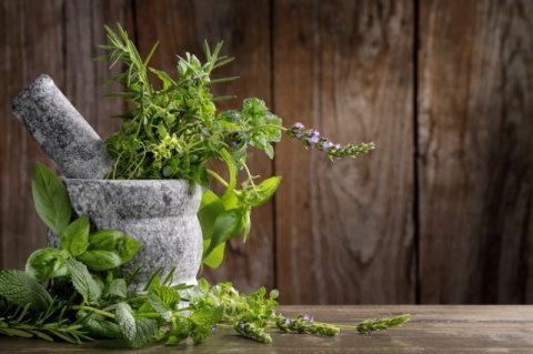 МИР РАСТЕНИЙ. Пряные травы для вашего сада