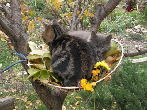 Как спасали котёнка  (история из интернета старая,но очень смешная).Читайте и происходящее представляйте.:):)