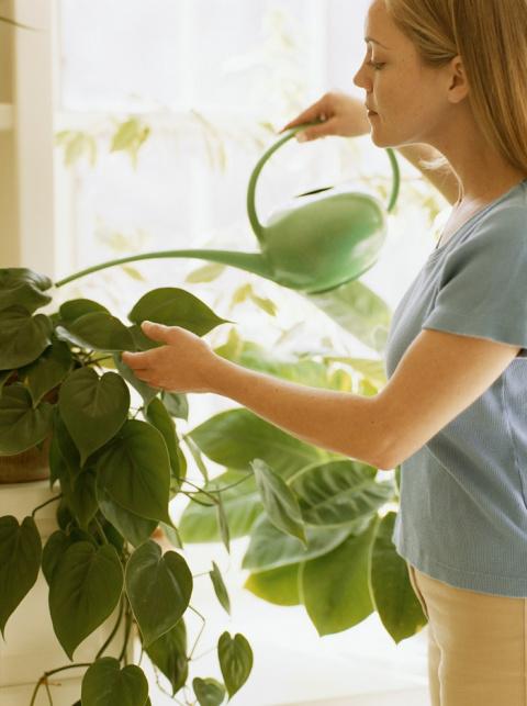 Комнатные растения будут вам благодарны за такой уход